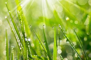gesunder grüner Rasen