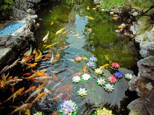Teich mit Fischen