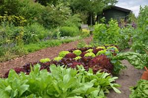 Bauerngarten Anlegen Tipps Für Pflanzen Und Blumen Gartendialogde