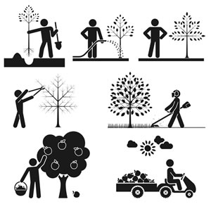 Obstbaumpflege im Jahresverlauf