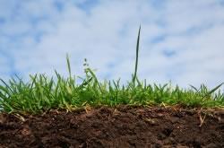 Rasen Boden