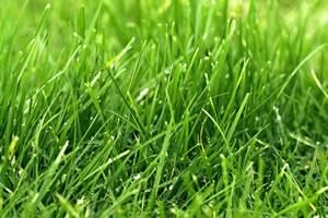 saftig grüner Rasen