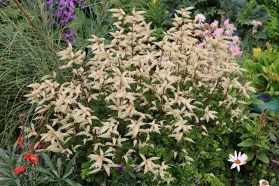Top Schattengarten anlegen - beliebte Schattenpflanzen und #PT_93