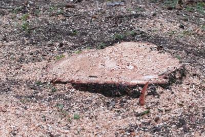 Baumwurzel Baumstumpf entfernen