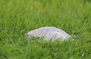 Kaliumdünger Rasenpflege