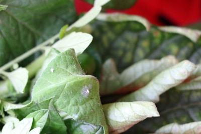 Fliegen In Blumenerde Trauermücken Bekämpfen Gartendialogde