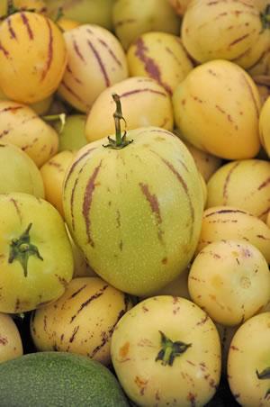 Frucht der Melonenbirne
