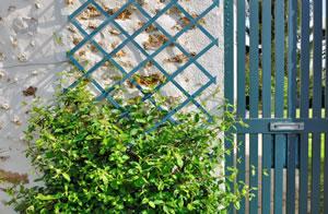 Beliebte Immergrüne Winterharte Kletterpflanzen Gartendialogde