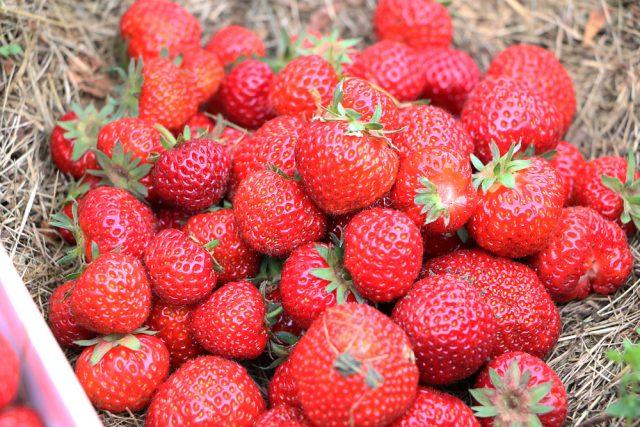 Alte Erdbeersorten