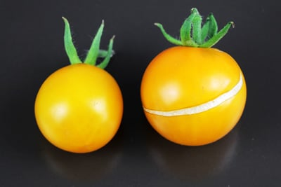 gelbe Tomatensorten