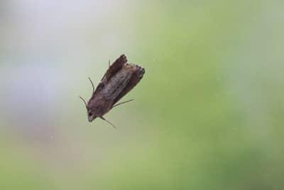 Kleidermotten Erkennen Und Bekampfen Gartendialog De