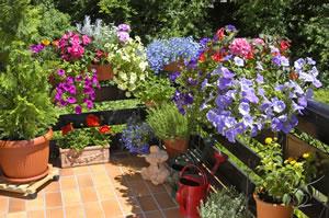 balkonbepflanzung w hrend des jahres ideen und tipps On balkonbepflanzung sommer