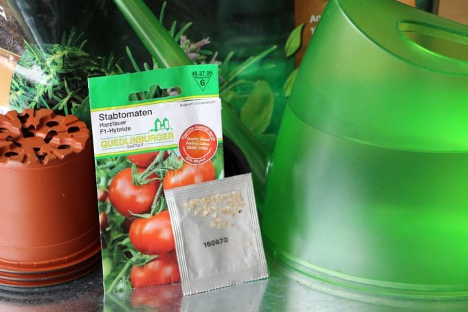 Tomatenpflanze selber ziehen