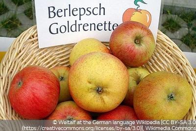 Apfel Berlepsch
