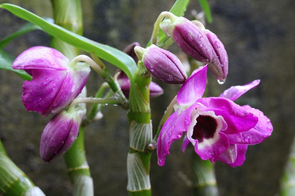 orchideen luftwurzeln schneiden