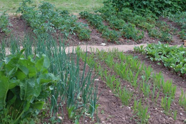 Gemüsebeet anlegen - Vorbereitung und Pflanzplan ...