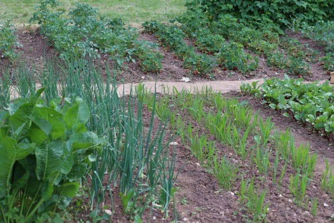 Uberlegen Gemüsebeet Anlegen