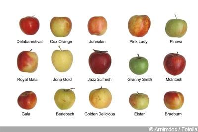 Apfel Malus Sorten