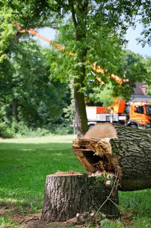 Atemberaubend Baum richtig fällen - Anleitung und Genehmigungen - Gartendialog.de @SA_13