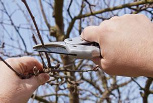 Gartenschere für Obstbaum