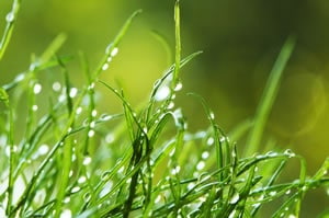 feuchter Rasen