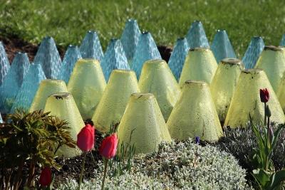 Salathaube Schutz Nacktschnecken