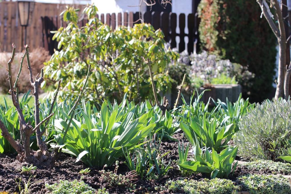 Vorgarten Gestalten Bepflanzen Schone Ideen Schoner Wohnen