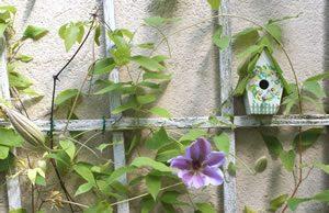 Rankgitter für Kletterpflanzen