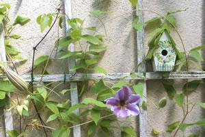 Klettergerüst Für Pflanzen : Rankhilfen kletterhilfen und spaliere für kletterpflanzen