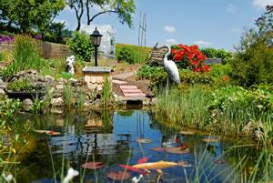 Gartenteich mit Fischen