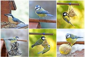 Vögel Collage