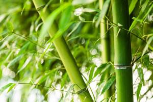 Bambuspflanzen Bambus Pflege Und Rhizomsperre Gartendialogde