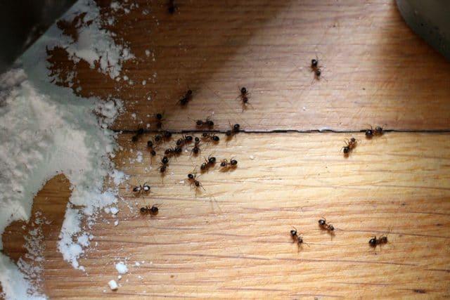 Ameisenbekämpfung in Haus, Garten und Rasen - Gartendialog.de