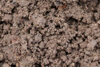 Boden Erde Mutterboden