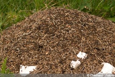 Fliegende Ameisen In Haus Und Garten Bekämpfen Gartendialogde