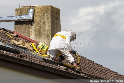 Bienennest entfernen