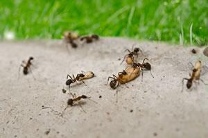 Ameisenbekämpfung In Haus Garten Und Rasen Gartendialogde