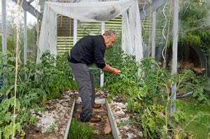 Tomatenhaus Selber Bauen Bauanleitung Gartendialog De