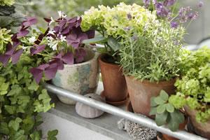 Kräuter Trocknen Und Einfrieren Anleitung Gartendialogde