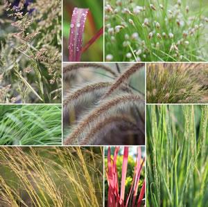 Gräser Collage