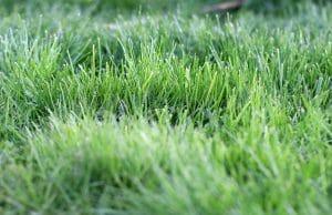 Rasen mähen Zeit