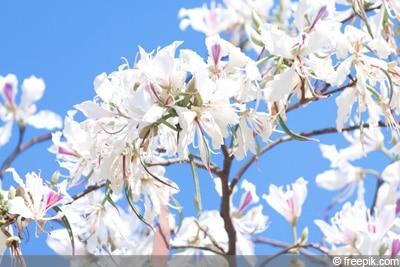 Orchideenbaum