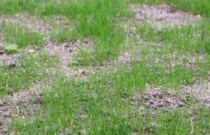 Rasen braune Stellen