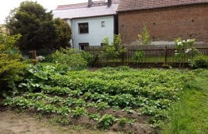 Nutzgarten