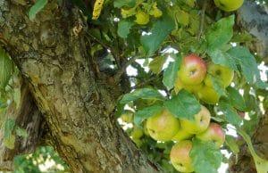 Obst anbauen Obstgarten
