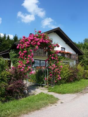 Rosenbogen am Eingang