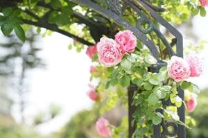 Rosenbogen aus Metall