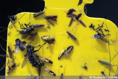 Fliegenfalle selber bauen