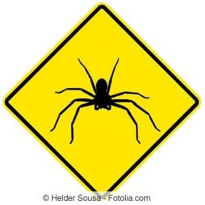 Achtung Spinnen