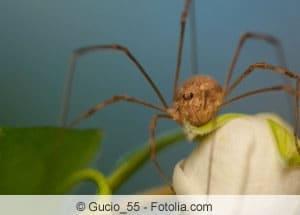 Wirksame Mittel Gegen Spinnen Im Haus Und Auf Dem Balkon